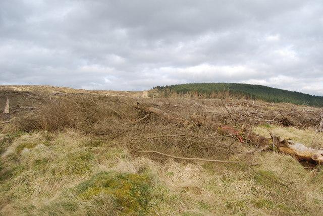 Auldton Fell seen across large area of clearfell