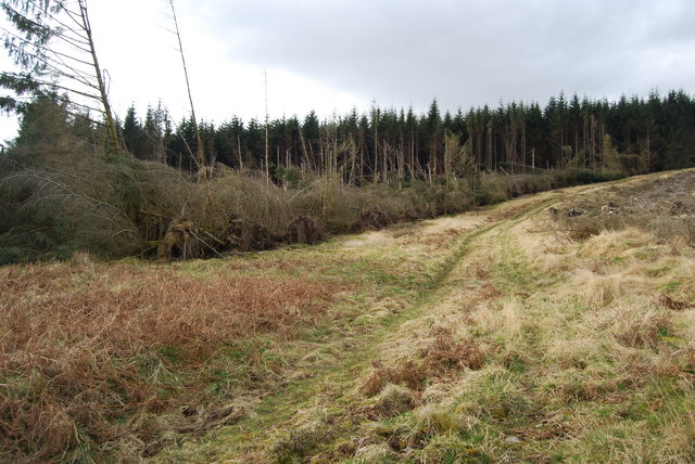 Old track between mature forest and clearfell