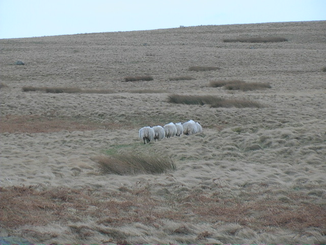 Travelling line astern in a sea of grass
