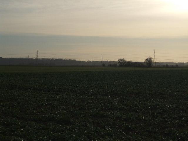 Ox Pasture Fields