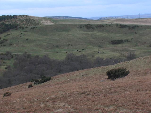 The northern 'tail' of Ilderton Moor looking north