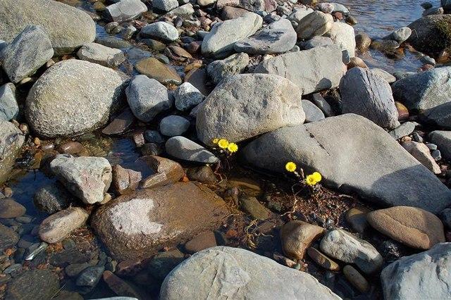 Signs Of Spring In Dobbingstone Burn