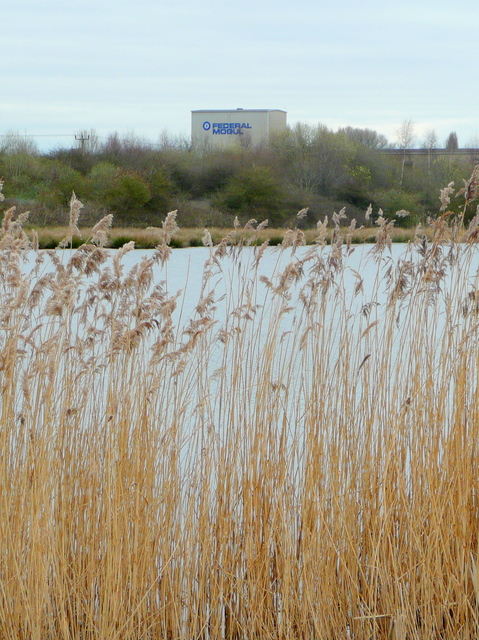 Reeds lining an old flooded gravel pit