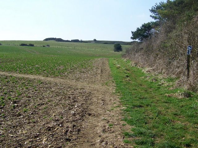 Bridleway junction, Pentridge Down