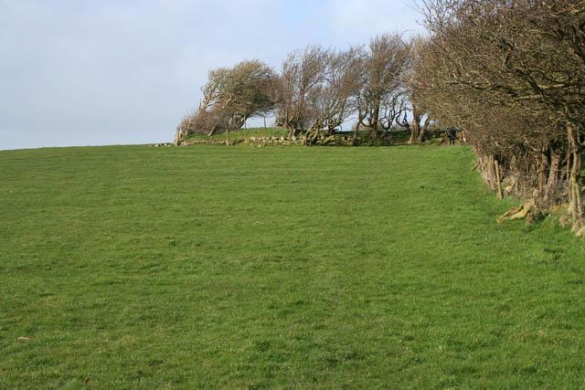 Field near Overton