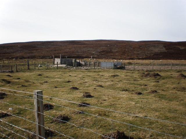 Sheep Folds at Rhilean