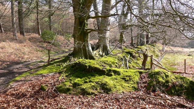 Mossy banks at field corner