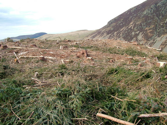 Forest clearance on Bowness Knott