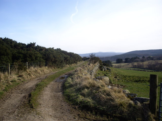 Track by moorland edge