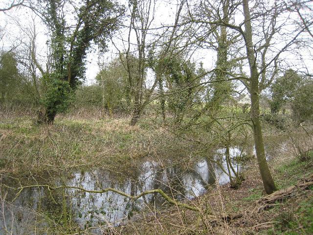 Thames & Severn Canal near Park Leaze bridge