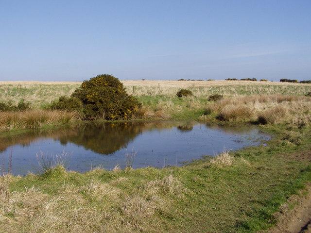 Pond off Hoddy Cows Lane