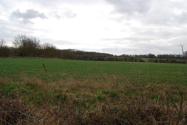 An arable field near Well Court
