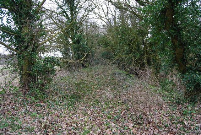 Bed of Dismantled railway