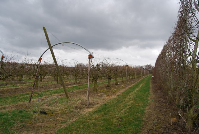 Apple Orchard, Amery Court