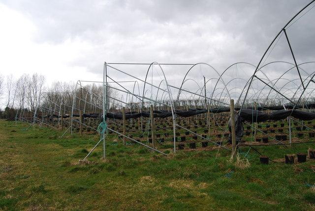 Polytunnels near Amery Court (2)