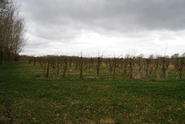 Orchard near Amery Court