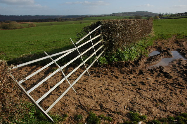 Gate and hedgerow near Llangrove