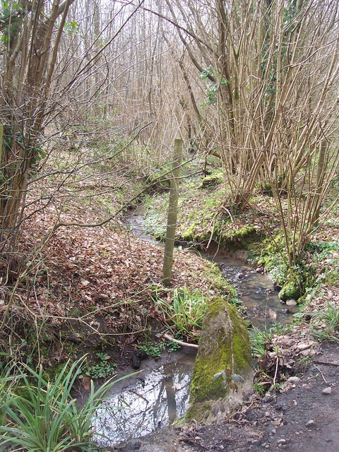 Stream in Darnold Wood