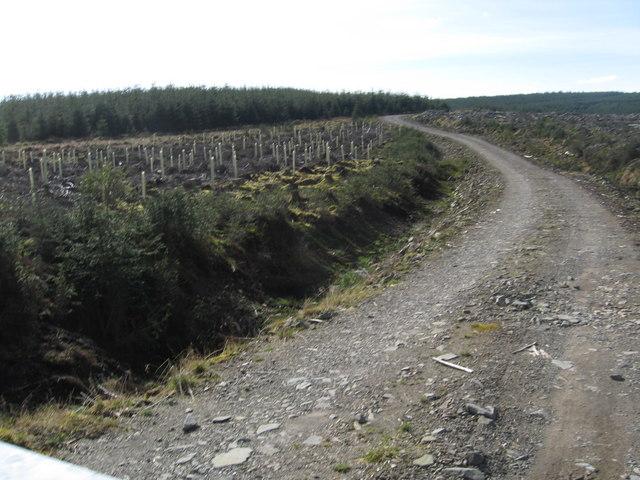 Track to forest on Little Bog Hill