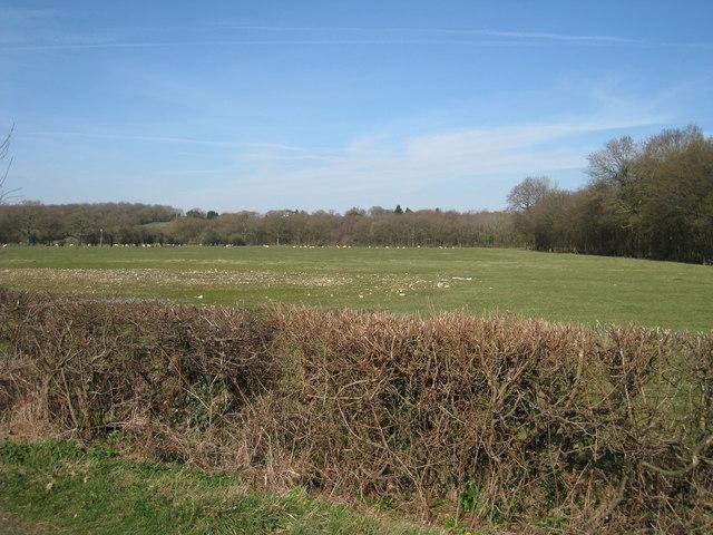 Field off Bethersden Road