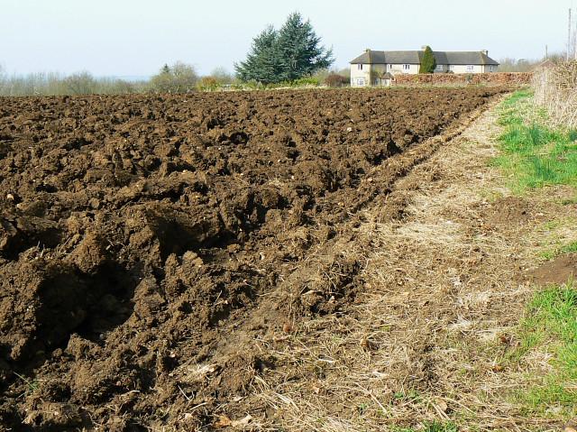 Field west of Trow Lane, Tockenham