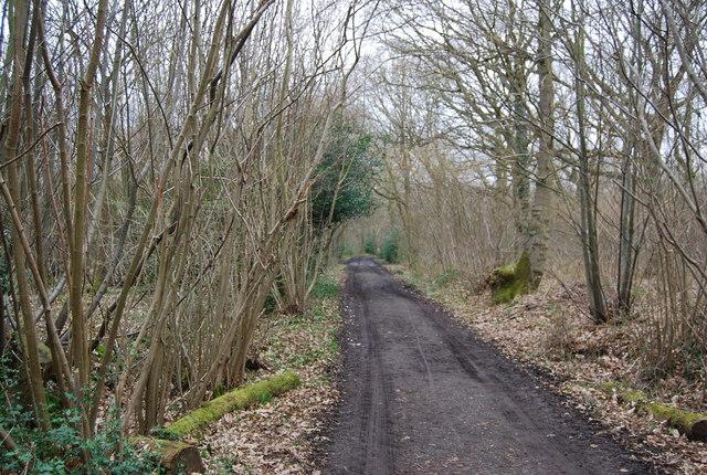 Track through Blean Wood