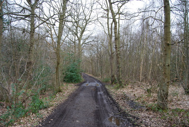 Track through Blean Wood (2)