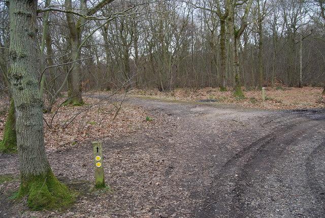 Footpath junction, Blean Wood