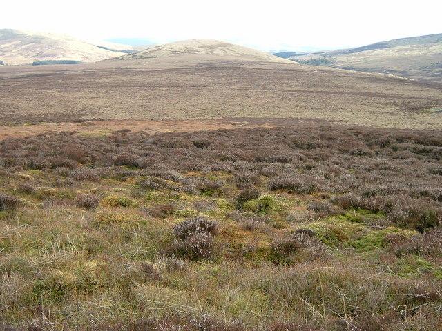 Expanse of heather moor