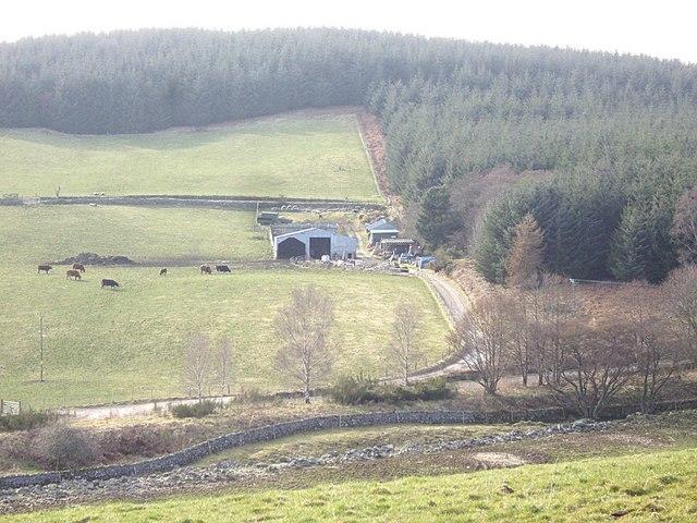 Stot Hill Wood