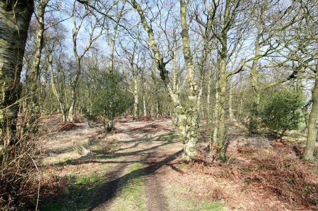 Gonder Lane Wood
