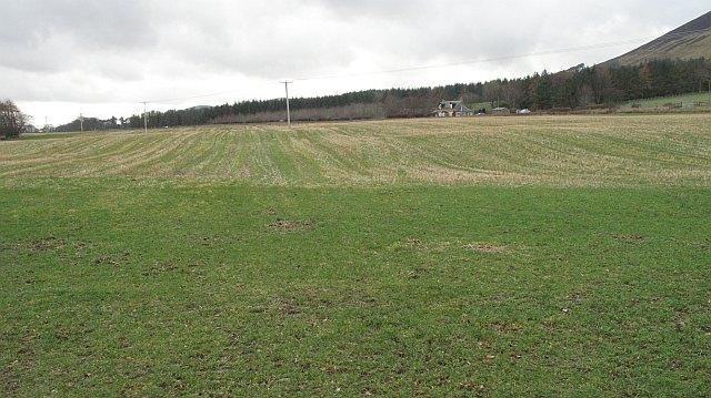 Grassland, Westside