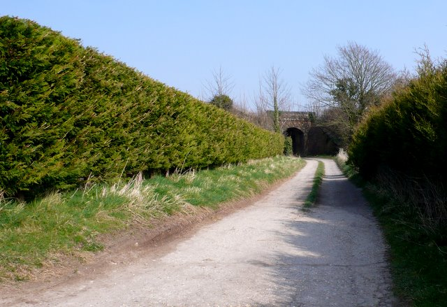 Track to Hog Cliff Bottom