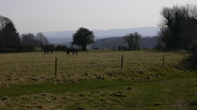 Horses in field at Vining Farm with the South Downs beyond