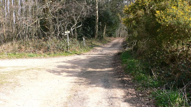 Junction of footpath and bridleway at Vining Copse