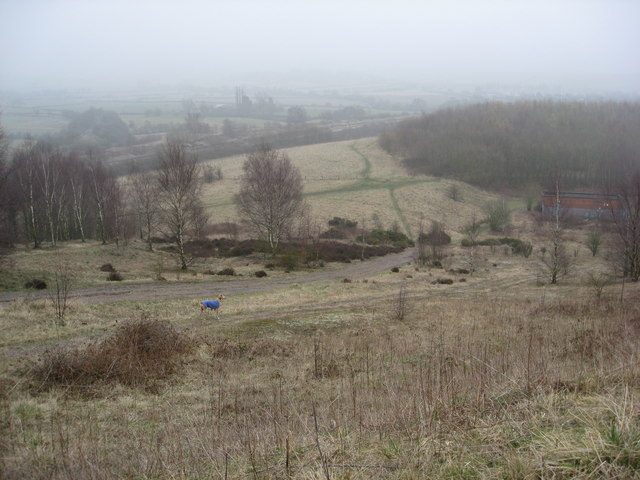 Morton Colliery Plantation - Footpath View