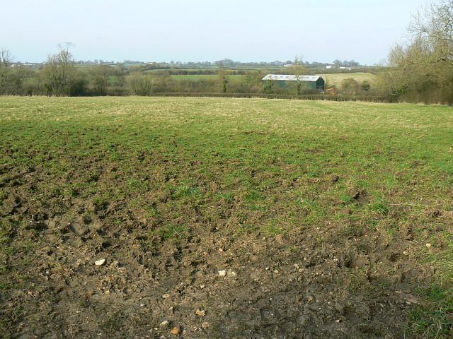 Field on the northern edge of Brinkworth