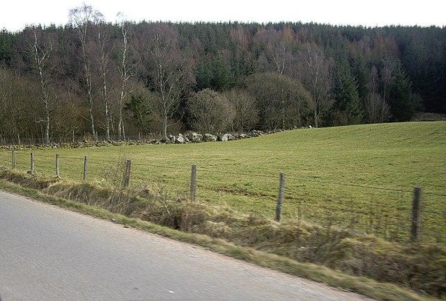 Woodland edge near Hilton
