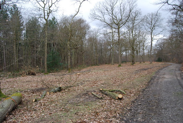 Cleared area by the path through Blean Wood