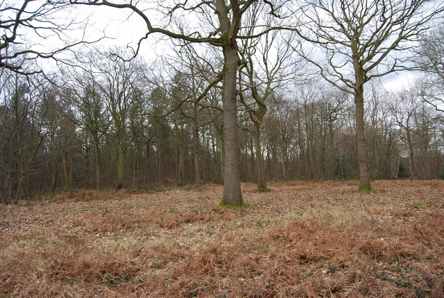 Blean Wood Nature Reserve