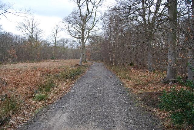 Path through Blean Wood (2)
