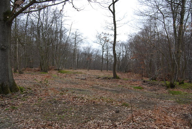 Clearing, Blean Wood