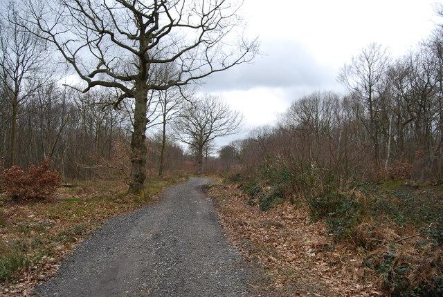 Track through Blean Wood (2)