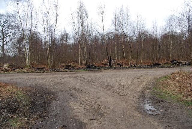 Track junction, Blean Wood