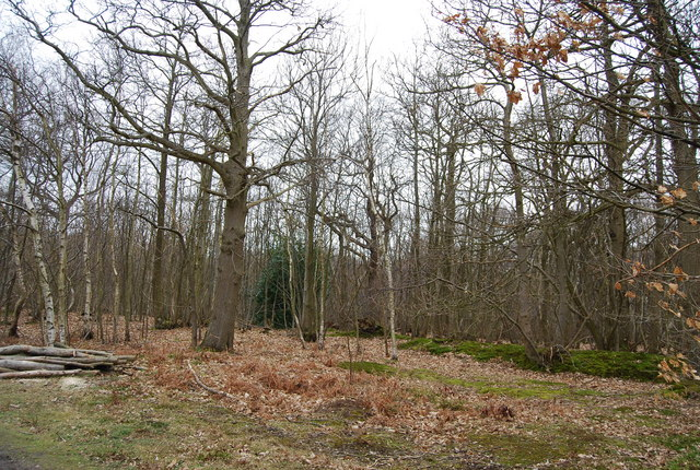 Earthbank, Blean Wood