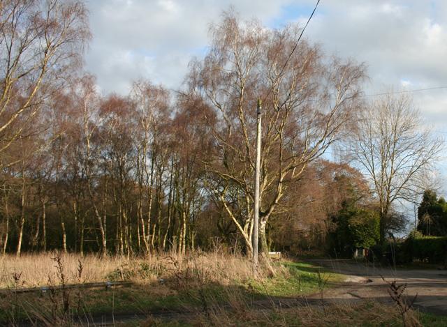 Scrubland at Sound Heath