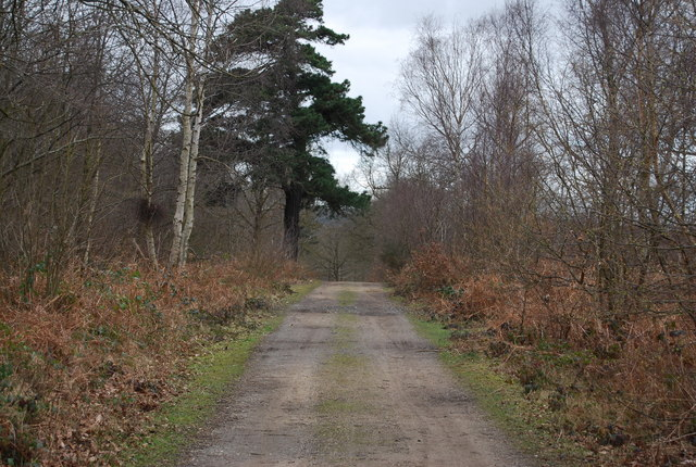 Track, North Bishopden Wood