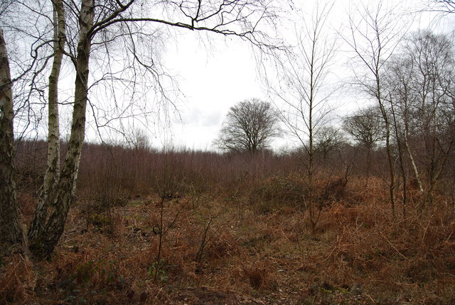 Clearing, North Bishopden Wood