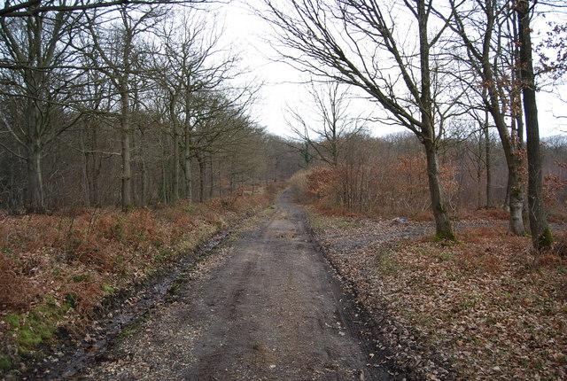 Track, North Bishopden Wood (2)
