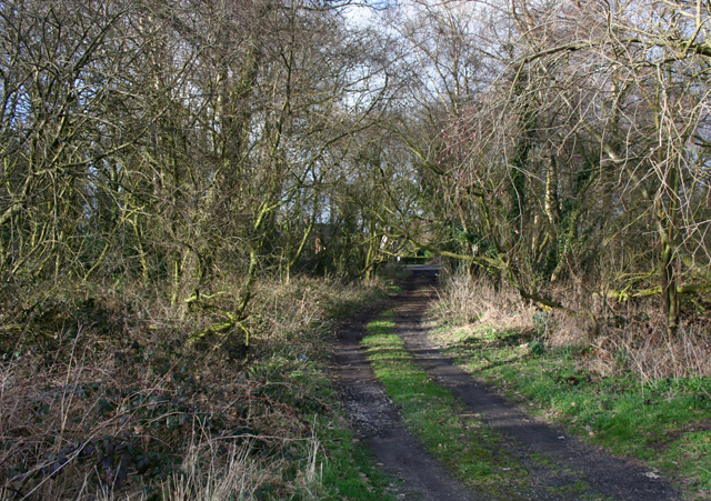 Track through scrubland at Sound Heath